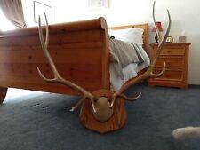 Mounted elk antlers