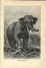 Stampa antica ELEFANTE INDIANO ELEPHANT 1891 Old antique print