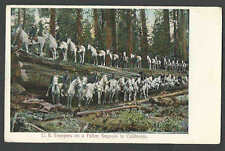 DATE 1907 PPC* VINTAGE US TROOPS ON HORSE BACK ON A FALLEN SEQUOIA TREE SEE INFO