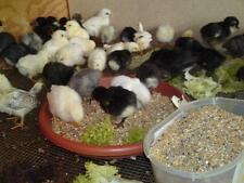Exoticfarm Küken Alleinfutter Kükenstarter Hühnerfutter gegrützt 6 kg Beutel