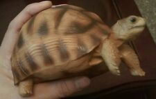 NICE 1:1 Life Size Madagascar Tortoise Turtle Replica Resin Model Figurine 14cm