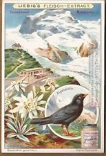 Monte Rose Rosa Italian Alps Edelweiss c1903 Trade Ad Card