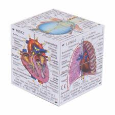 ZooBooKoo Scientific Menschlic Körper Cube  Systeme  Statistik deutsche Version