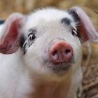 Vierge Salutation / Anniversaire / Cartes De Note pour Animal / Amoureux Chiens