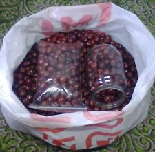 1 liter Dried Ziziphus jujuba Fruit - dried fruit and remedy for hypertension