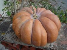 Courge Musquée De Provence 20 Graines. Bio