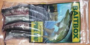 LAMPREY SECTIONS PIKE FISHING BAIT  FROZEN 5 packs