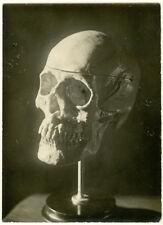 Photo Argentique Vanité Vanity Tête de Mort Vers 1920/30