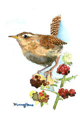 """ACEO Limited Edition 2.5""""x3.5""""- Wren of the day, Gift for bird lovers"""
