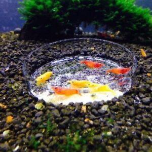 Portable Aquarium Fish Tank Clear Acrylic 65mm Shrimp Feeding Dish Feeder 2019