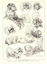1930s Antique Pekingese Dog Print Art Studies by C Ambler Pekingese Art 3330-D