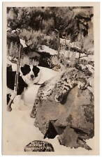 Real Photo Postcard Hunting Dog, Rifle and Wildcat in the snow of Alaska~106963