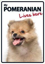 Pomeranian Lives Here A5 Plastic Sign
