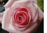 Pink Rose Needlepoint Kit or Canvas (Floral/Flower/Nature)