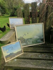Vintage Vernon Ward  X 3 Pictures Prints Framed Ducks / Puffins .