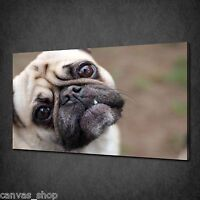 PUG DOG FUNNY FACE ANIMAL MODERN WALL ART CANVAS PRINT PICTURE READY TO HANG