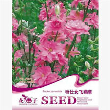 FD1757 Pink Larkspur Seed Delphinium Consolida Flowers Seeds ~1 Pack 30 Seeds~