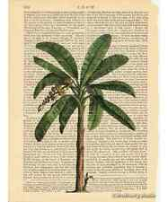 Banana Palm Tree Art Print on Antique Book Page Vintage Botanical Illustration