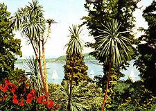 Tropeninsel Mainau ,1960 gelaufene AK