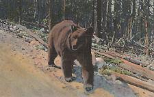 A Bear Hitch Hiker    # D24