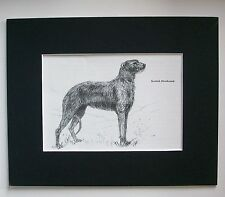 Scottish Deerhound Dog Print Gladys Emerson Cook Bookplate 1962 8x10 Matted Cute