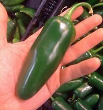 Giant Jalapeno Pepper Seeds (25 Seeds)