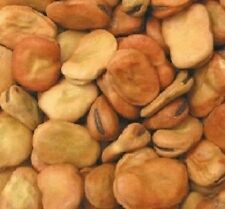 15 Fava Bean Seeds Giant Bean Seeds