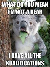 "Funny Koala Bear refrigerator magnet 3 1/2 X 3 1/2 """