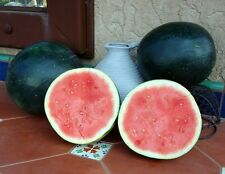 20 BLACK DIAMOND WATERMELON  2018 (all non-gmo heirloom vegetable seeds!)