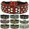 Brand New Spiked Studded Leather Large Dog Collar Pitbull Bully Terrier S M L XL