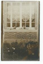 BM975 Carte Photo vintage card RPPC Animaux Chat Cat sur rebord de fenêtre