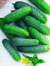 Cucumber Herman F1 Seeds Ukraine 10 seeds