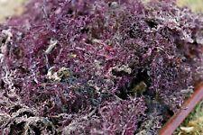 Púrpura Musgo de Irlanda (6oz) (Buy 2 Get 4oz gratis) sin sal agregada 100% natural sea Moss