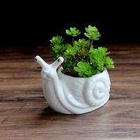 Snail Ceramic Planter For Succulent Decorative Mini Flower Pot Home Garden Decor