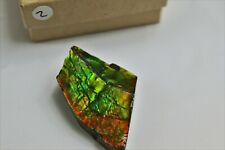 2) Natural Ammolite Gemstone Canada ~ Mineral Ammonite Fossil Crystal