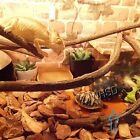 Waterproof 12V Reptile Silicon Heater for Tortoise Spider Chameleon Lizard Snake