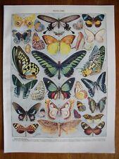 Exotic butterflies,...Antique print...Larousse 1900s