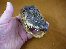 """G-Def-274) 4-1/8"""" Deformed Gator ALLIGATOR HEAD jaw teeth TAXIDERMY weird gators"""