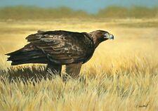 original pastel painting of Golden Eagle, 15 X 20, framed