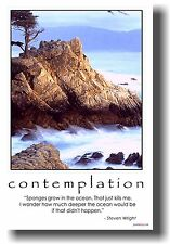 "NEW Funny POSTER - Contemplation: ""Sponges grow.."" Comedian Steven Wright"