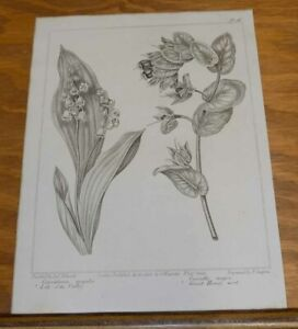 1806 Antique FLORAL Print/LILY OF THE VALLEY, and GREAT HONEY WERT