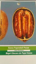 KANZA PAPERSHELL PECAN TREE Shade Trees Live Healthy Plant Large Pecans Nut Wood