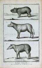Tapir Cabiai Wasserschwein Capybara Hirscheber Babirusas Pig-Deer Carpincho
