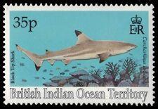 BR INDIAN OCEAN 155 (SG159) - Black Tip Shark (pa16249) BIOT