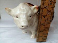 Melba bull (461)