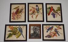 5 Rudolf Freund Bird Watercolor Paintings Lot 15