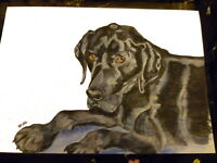 Black Labrador Art Print A4 Matte Senior Dog Art Bargain Price Surplus Stock