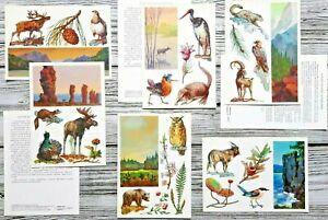 Botanical Herbs Animals Birds Species  Flowers  Nature Set 16 Vintage Postcard
