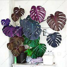 100 pcs Palm Tree Turtle Leaves Monstera Seeds, Bonsai Angiosperms, Mixed