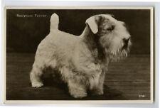 c 1930 Adorable Little Sealyham Terrier Dog Puppies Puppy photo postcard